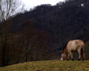 Parque-PrehistoriA-Teverga9